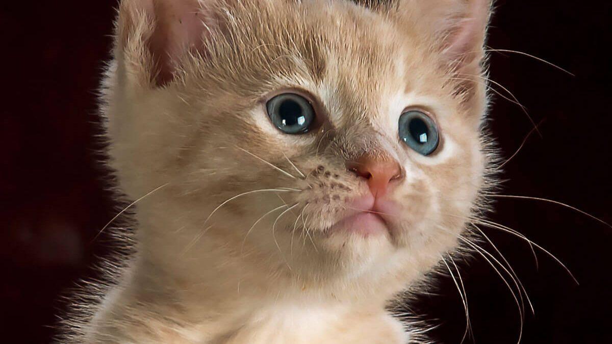 9 Fatos Cient Ficos Que Voc Precisa Saber Sobre Gatos Terra Dos Bichos